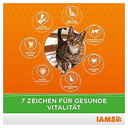 IAMS Adult Cat Lamb 3