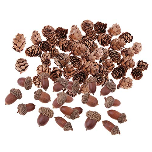 sharprepublic 40 Stü Echte Natürliche Kleine Tannenzapfen Getrocknete Eichel Für Akzente Dekore Ornament