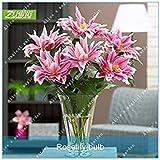vegherb Zlking Rare 5pcs Rose Double Oriental Rose Lily Belonica Bulbes à Fleurs...