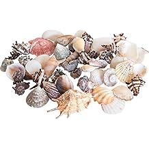 Bolsa Conchas de Mar Tropicales Grande 1 Kg Casa Decorar Interior Diseño Baños