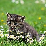 VERO HOME 10696 by TobiasBecker Tierwelt - Kleine Katze in Wiese, Premium-Druck auf 60 x 60 Birkenholz