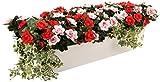 Closer To Nature Kunstblumen Rosa und Rot Azalee Display in einem Hochglanz weißen 80cm Pflanztrog–Kunstpflanzen und Display-Serie