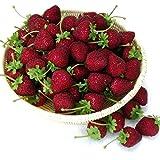 Gresorth 12 Stück Künstliche Lebensechte Weinrot Erdbeere Deko Gefälschte Früchte Obst Party Festival Dekoration