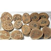 Septarie, Septaria, aus Marokko, ca. 431g, oft auch Septaria-Paare, mit wunderschönen Strukturen. preisvergleich bei billige-tabletten.eu