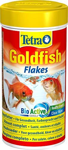 Pesci e animali d'acqua