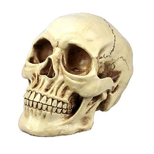 Special Bridal Unheimlich Halloween Dekorationen Realistische Lebensgröße Menschlicher Schädel Menschlicher Erwachsener Schädel Anatomisches Modell