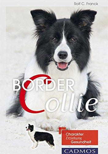 border-collie-charakter-erziehung-gesundheit