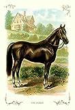 Fine Art Print–Das Pferd, 1900von Bentley Global Arts Gruppe, canvas, multi, 7 x 11