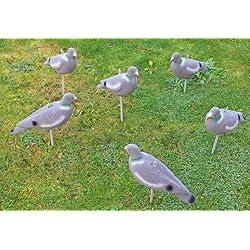 Nitehawk - Lot de 12 appelants pigeons pour la chasse /le tir - pigeons entiers - floqués