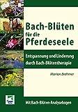 Bach-Blüten für die Pferdeseele: Entspannung und Linderung durch Bach-Blütentherapie