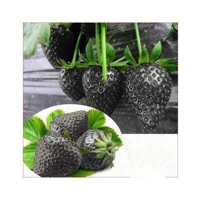 graines de fruits très nutritifs. 200pc rares graines de fraises noires. Garden Bonsai fruits