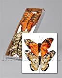 OASIS® 7cm Feather Butterflies on Wire - Yellow/Orange (box of 12)