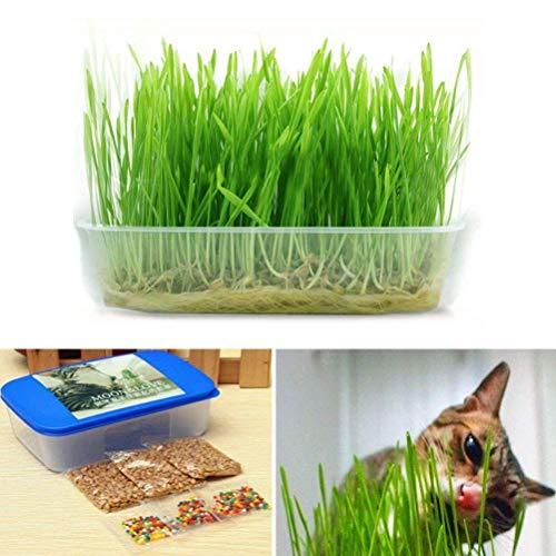 Fash Lady 1 Satz Heißer Grün Digestive Kristall Katzenminze Gras Gesunde Treat Pflanze Doppel...