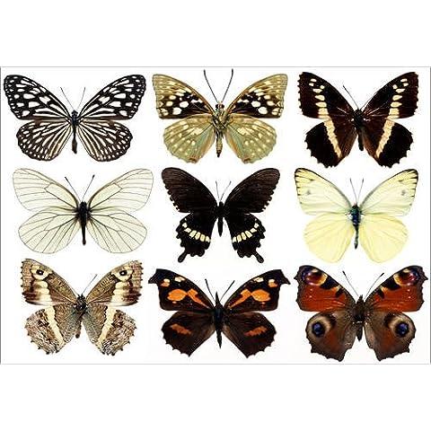 Stampa su tela 60 x 40 cm: collection of butterflies di Colourbox - poster pronti, foto su telaio, foto su vera tela, stampa su tela