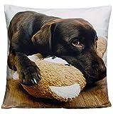 Kissenhüllen 40x40 cm Dekokissen Kissenbezug Fotokissen Kissen Hüllen Bezug Bezüge Hunde Dog (Labrador #3685)