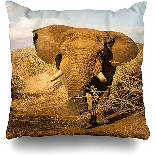 ZB Luxury Pillowcase,Africa African Elephant Bull Charges Nature Display July Park Design Home Pillow Case Square Zippered Decor Pillowcase,45Cmx45Cm -