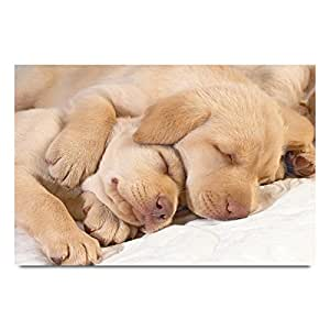 ezyPRNT Sleeping puppies Printed Wall Poster (Size: 36x24 inch)