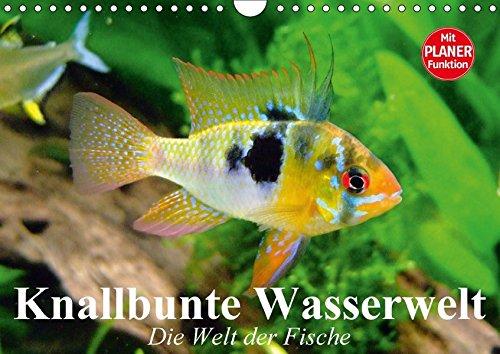 Elisabeth Fisch (Knallbunte Wasserwelt. Die Welt der Fische (Wandkalender 2018 DIN A4 quer): Die bunte Welt der Fische und Wasserbewohner (Geburtstagskalender, 14 ... [Kalender] [Apr 01, 2017] Stanzer, Elisabeth)