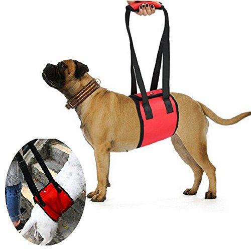 Systond Hundehalsband Support Sling Harness Rehabilitation Halfter hilft Hunden mit schwachen Beinen Stand Up Climb Treppen für kleine mittlere große Hunde