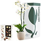 Eden4flowers PLT-ORCD-(F)-(GL8) 'Large Twin Stemmed Phalaenopsis Flowering Orchid' Plant and Chocolates - White