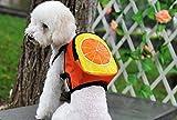 Rucksack Obst für Ihr Haustier tragen Ihr Wasser, ihre gemeindesäle Reinigungstücher und...