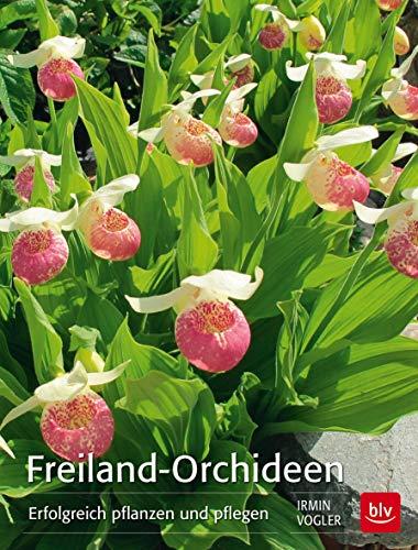 Orchideen So pflege