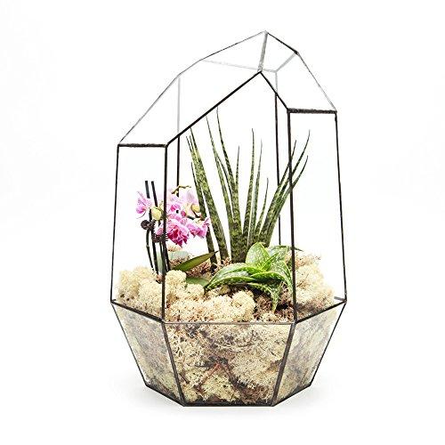Supersize Extra Large Terrarium Aztec Gem With Live Succulent