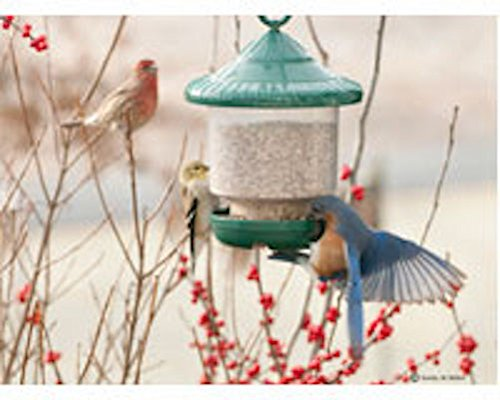 Birdquest LLC/Songbird SE7012verde Clingers Only