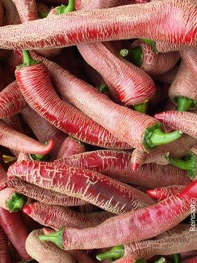Seedeo Peperoni Elefant (Capsicum annuum) 25 Samen