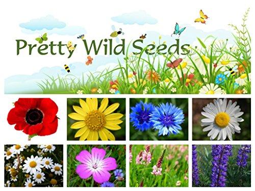100-pure-cornfield-wild-flower-seed-meadow-100g-by-pretty-wild-seeds-100g-no-grass