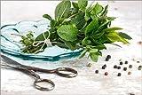 Posterlounge Leinwandbild 180 x 120 cm: Küchenkräuter 21 von Nailia Schwarz - fertiges Wandbild, Bild auf Keilrahmen, Fertigbild auf Echter Leinwand, Leinwanddruck