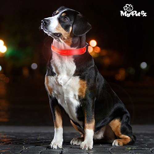 Collar Led Para Perros My Pet Ez