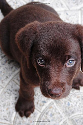 Beautiful Chocolate Labrador Retriever Dog Journal