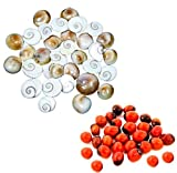 Ankita Gemstones Set 0f 30 Pcs Gomti Chakra and Natural Red Gunja Red Chirmi best price on Amazon @ Rs. 240