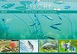 Fische in Teichen und Flüssen (Wandkalender 2019 DIN A3 quer): Großartige Unterwasseraufnahmen von...