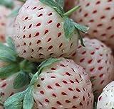 100 Samen weisse Erdbeere, Ananas Erdbeere, pineberry, Import china