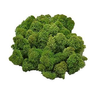 Muwse Island-moos V 50g Tannen-grün vor-gereinig weich haltbar. Deko-moos Floristik-moos Bastel-moos