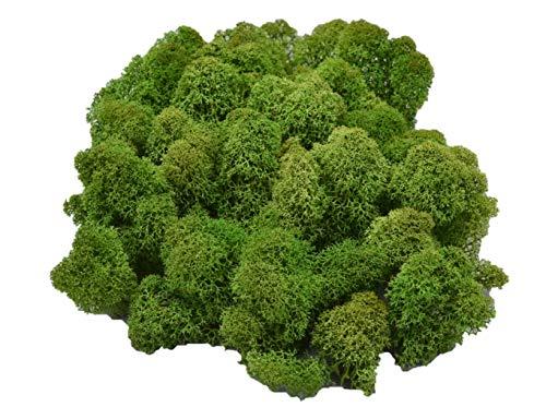 Muwse Island-moos V 50g Tannen-grün händisch vor-gereinig präpariert gefärb weich haltbar. Deko-moos Floristik-moos Bastel-moos Modellbau-moos Rentier-moos Iceland-Moss