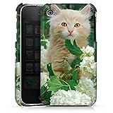 DeinDesign Coque Compatible avec Apple iPhone 3Gs Étui Housse Chat Kitten Kitten Bébé Chat
