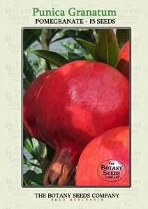 Punica Granatum (15) Graines - Grenadier Semences [Pomegranate]
