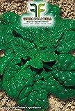 400 Aprox- Semillas de espinaca Giant Riccio America - Spinacea Oleracea en paquete original producido en Italia - Espinaca gigante