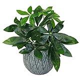 Leaf Blatt-Entwurf UK Realistische Künstliche Money Tree Topfpflanzen in Schwarzem Kunststoff-Topf, 45cm Geld-Baum Pflanze
