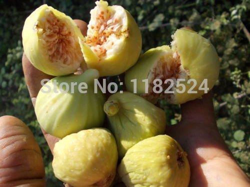50-semi-bag-rari-in-vaso-di-alberi-da-frutto-di-nuove-varieta-di-semi-dolce-arancione-piantine-aranc