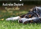 Australian Shepherd - Augenblicke (Wandkalender 2017 DIN A3 quer): Faszination Australian Shepherd - Berührende Augenblicke begleiten Sie durchs ganze ... (Monatskalender, 14 Seiten ) (CALVENDO Tiere)