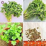 Semillas Semillas de cilantro 100pcs de la herencia All Seasons perejil Semillas de vegetales orgánicos Bonsai planta comestible fragante para jardín