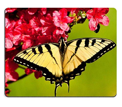 liili-tapis-de-souris-tapis-de-souris-en-caoutchouc-naturel-dimage-25439203-eastern-tigre-swallowtai