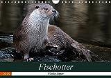 Fischotter, flinke Jäger (Wandkalender 2019 DIN A4 quer): Fischotter sind flinke und wendige Jäger (Monatskalender, 14 Seiten ) (CALVENDO Tiere)