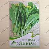Perenni semi zenzero semi di ortaggi Zingiber officinale semi balcone frutta e verdura - 100 pezzi