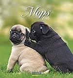 Mops 2018: aufstellbarer Postkartenkalender