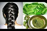#4: Go Organic Curry Leaves Powder for Grow Long, Strong And Shiny Hair ( 100 Grm )